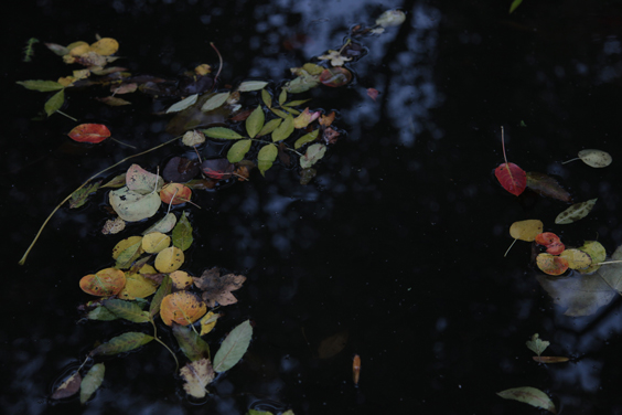 5.-Ruth-Maclennan,-Zigni,-(still),-2015.©-Ruth-Maclennan.-Courtesy-the-artist-and-Tintype-(3)_564